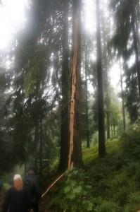 k-Schwarzwald 23-25.08.13 140 Wasserfälle Seebach